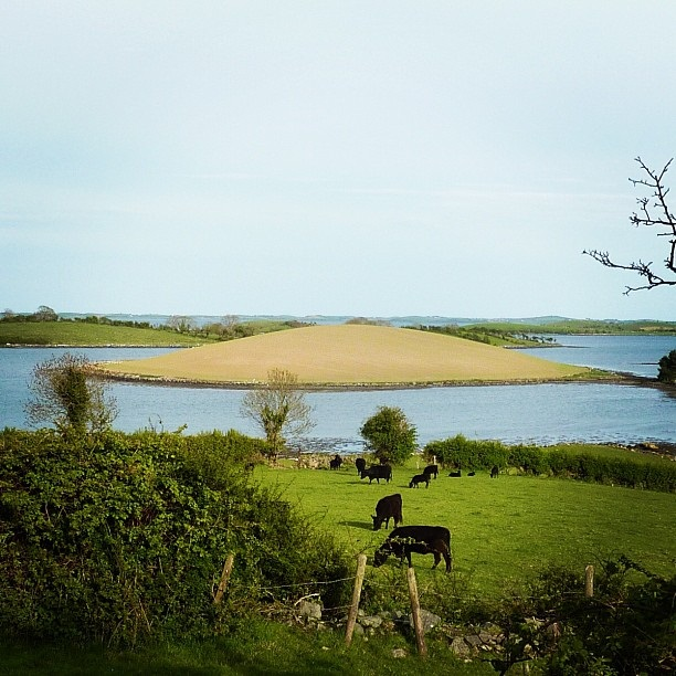 Strangford Lough - green fields and surrounding islands (image by Sabi Style)
