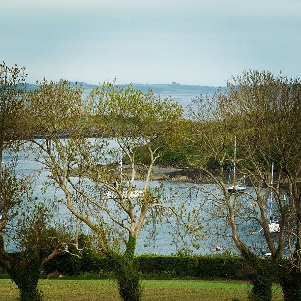 Strangford Lough - view through the trees of Rainey Island (image by Sabi Style)